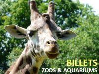 promo billet zoo