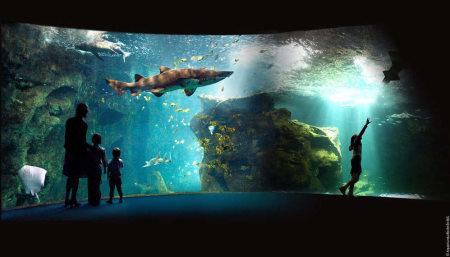 aquarium la rochelle tarifs horaires visites
