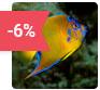 aquarium saint malo reduction billet