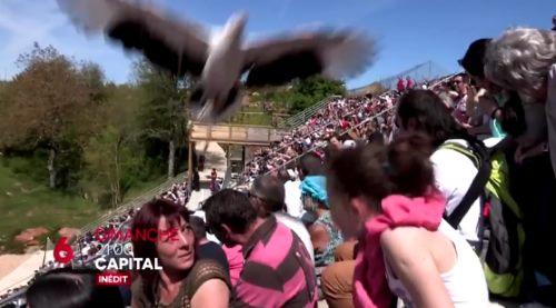 emission zoo beauval capital