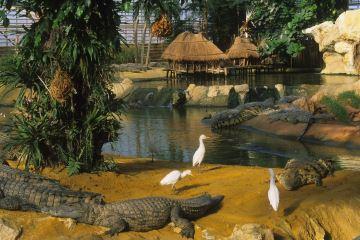 ferme aux crocodiles ouverture tarifs