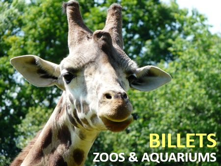 promo billet zoo moins cher