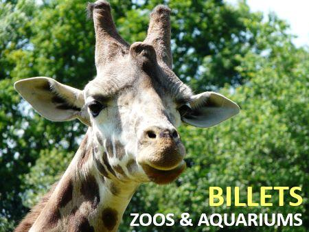 promo billet zoo moins cher
