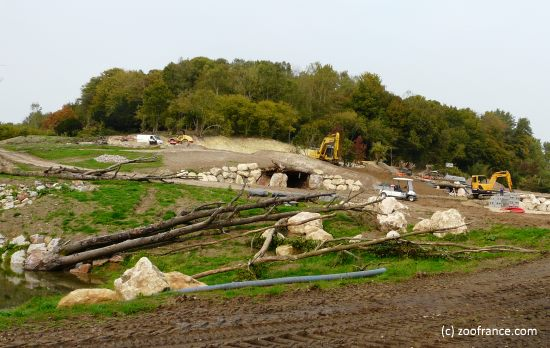 zoo cerza chantier ours