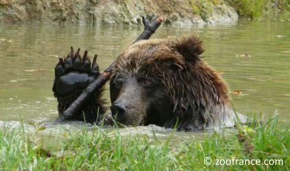 zoo cerza lisieux tarifs ouverture nouveautés animaux